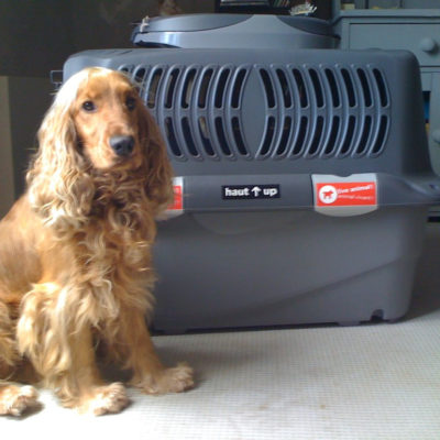 犬と一緒にイギリスに引っ越す!【その③ 適切なケージ・クレートの選び方】