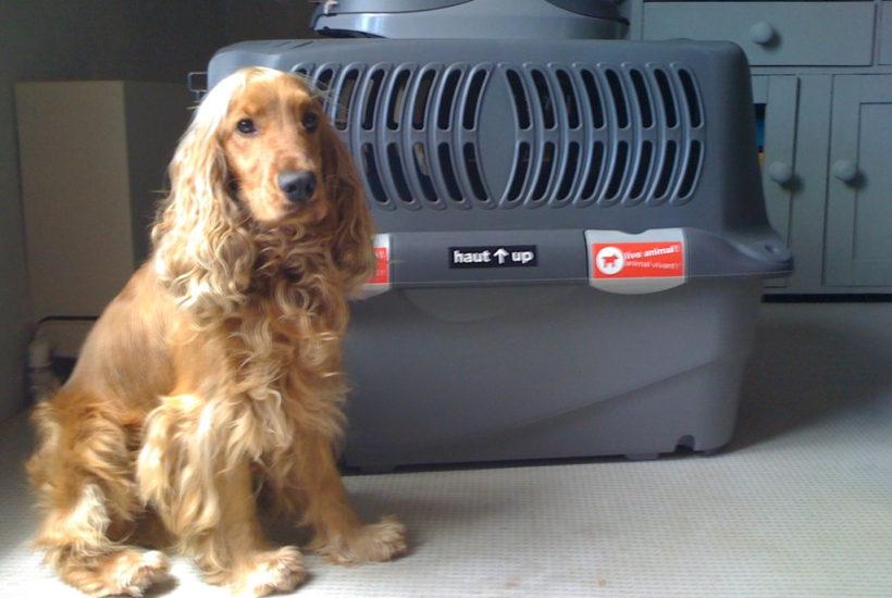 イギリスに行くために飛行機に乗る犬