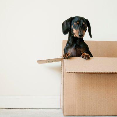 犬と一緒にイギリスに引っ越す!【その② 検疫と書類の準備】