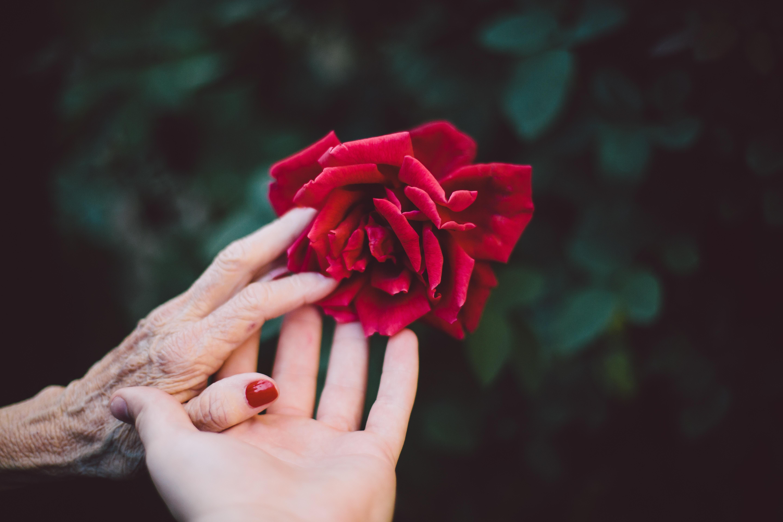 母の死と遺産