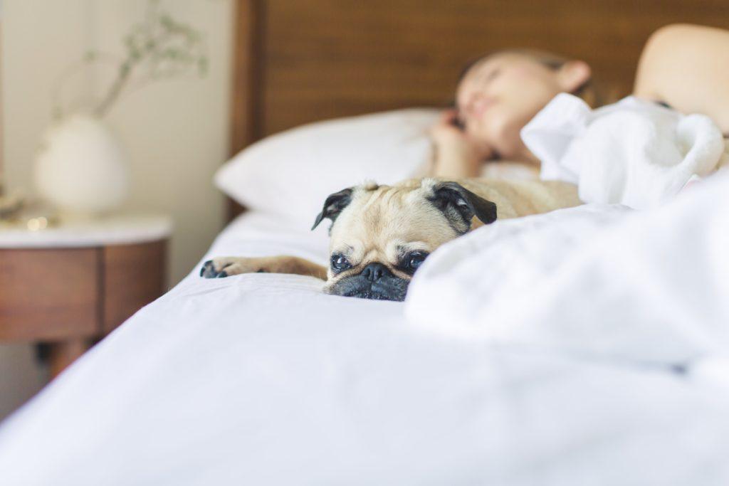 検疫後に便利なペットと泊まれるホテル