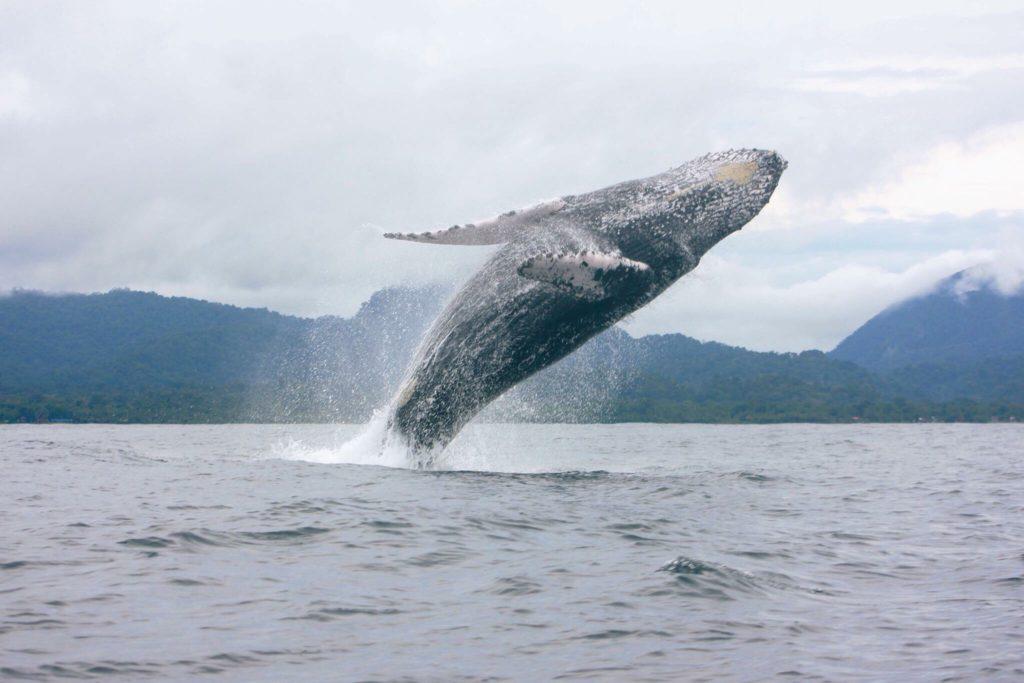 日本人として捕鯨問題に向き合う