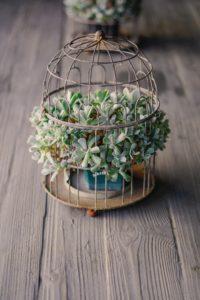 鳥かごに植物を入れて飾る