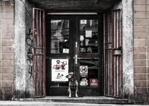 お店の前で飼い主を待つ犬