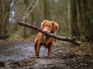 犬は木の枝が大好き