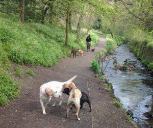 ノーリードで犬が散歩するイギリス