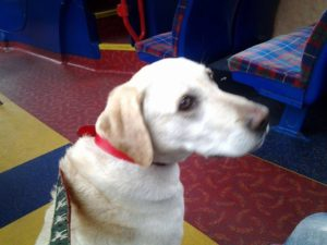 バスに犬が乗れるイギリス