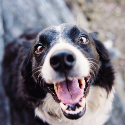 【犬が苦手な人へ】リードなしの犬と遭遇した時の7つの知恵