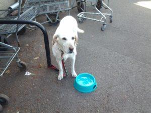 お店の人が犬に水をくれるイギリス