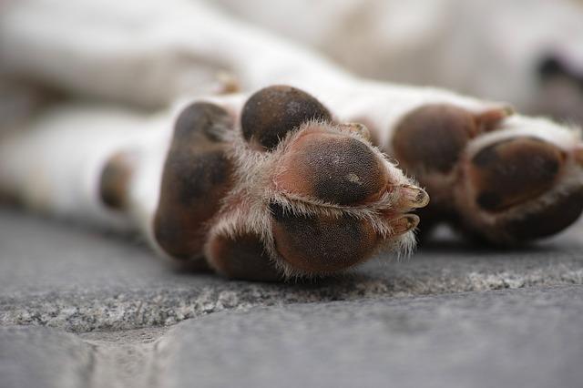 犬の安楽死の基準