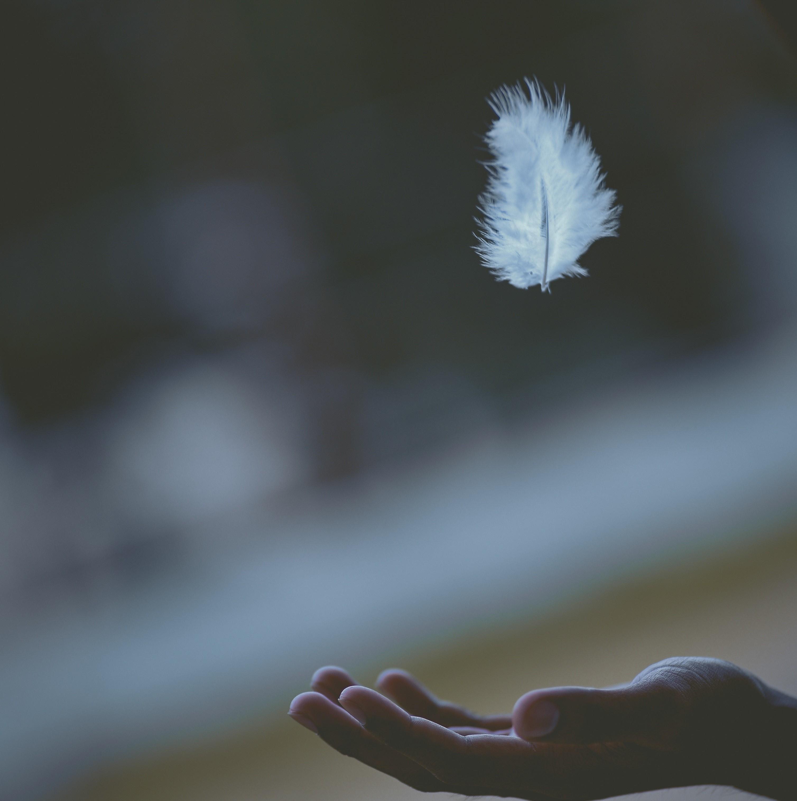 鳥の羽のように軽いヴァランの弓